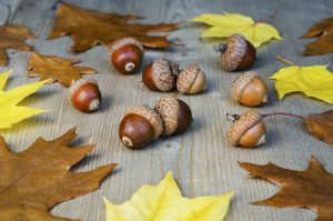 Autumn yellow leaves and acorns on a tree background 3