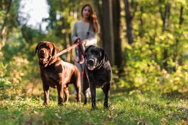 Honden Uitlaatservice in Ede