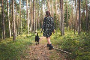 processierups honden in het bos