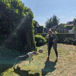 Old Engelse Bulldog Amy in actie met een bal