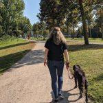 Labrador uitlaten met Doggy Time Ede