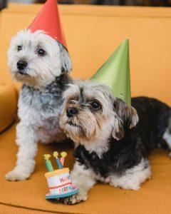 Verjaardagstaart voor honden