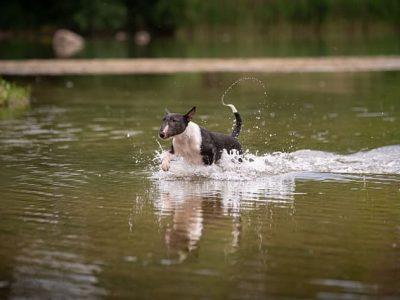 hond in het water afkoelen bij warm weer